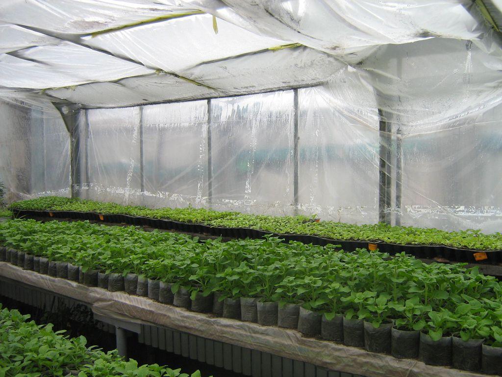 Как сделать бизнес на выращивании рассады