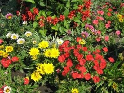Поиск новых декоративных растений для удовлетворения любых потребительских запросов.