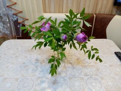 Древовидный пион из своих семян 8 лет спустя.
