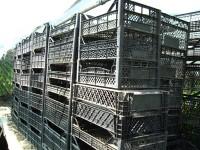 Где взять дешевые производственные горшки и техтару для выращивания рассады