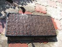 Полив рассадной кассеты, засеянной семенами