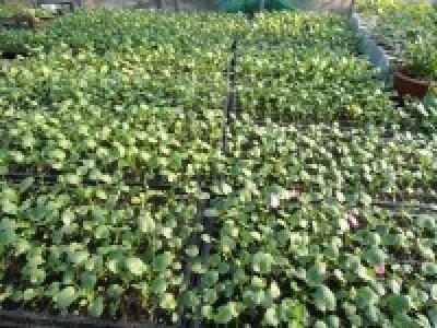 Что ожидает поздно высеянные осенью растения?
