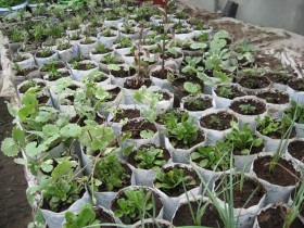 Дождались похолодания - пора размножать многолетние растения делением корневища