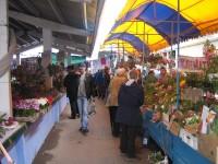 Рынок цветочной рассады в Луганске