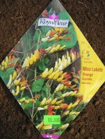 Семена Мины Лопастной от RoyalFleur