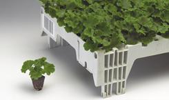 Выращивание рассады цветов из сеянцев, как альтернатива семенному