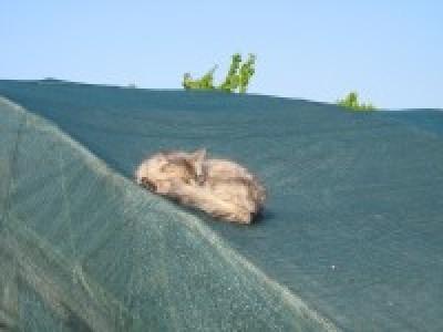 Затеняющие сетки для затенения теплицы: цены, где купить.