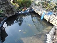 Размещаем водные лилии Нимфеи в новом водоеме